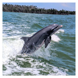 Treasure Seekers Shell Tours - Dolphin